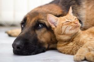 Siegreich im Kampf gegen Tierhaare